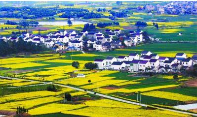 休闲农业规划与乡村177漫画发展日益受到国家重视