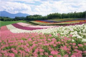 http://www.cxhyplan.com/田园景观