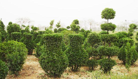 园林花卉苗木的景观应用和分类